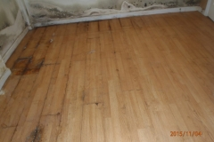 Mold Damaged Flooring