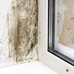 Mold Removal Columbia SC, Mold Cleanup Columbia SC, Professional Mold Removal Columbia SC